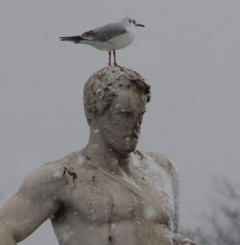Statue in den Tuilerien im Schnee mit Möwe